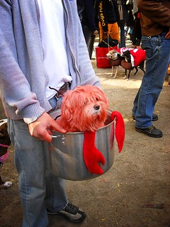 Halloween Dog Parade, Tompkins Square Park 1 | by Vivienne Gucwa