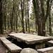 Tavolate granitiche - Bosco Selene