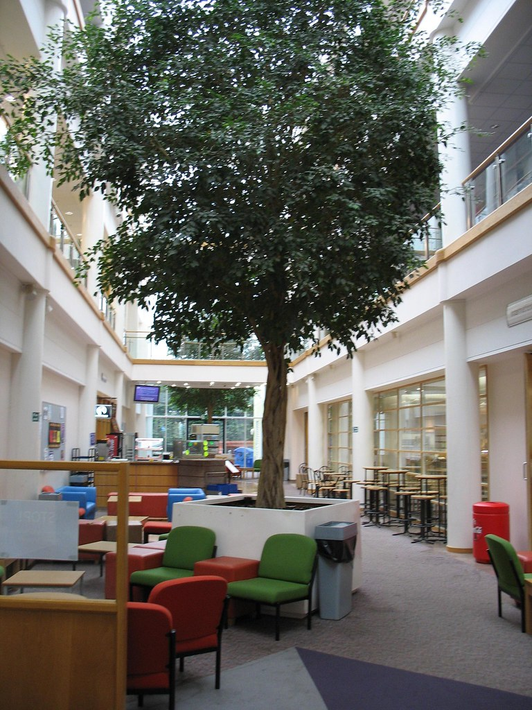 Atrium Tree South Devon College The Atmosphere In This In Flickr