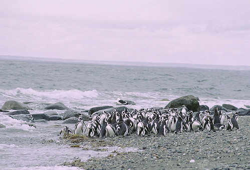 Penguins on shore | by World Bank Photo Collection
