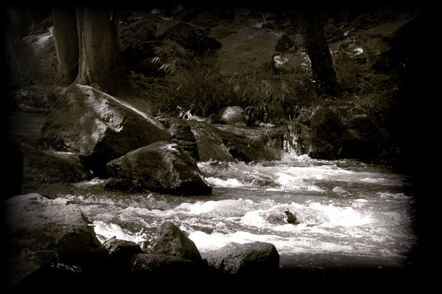 The Grateful Dead – Black Muddy River Lyrics | Genius Lyrics