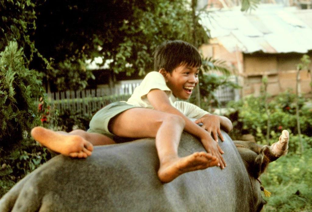 Buffalo Boy, Jakarta, Indonesia  Kent Clark  Flickr-3563