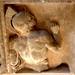 Statue Trier00