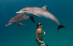 Dolphins and diver | by WIlly Volk
