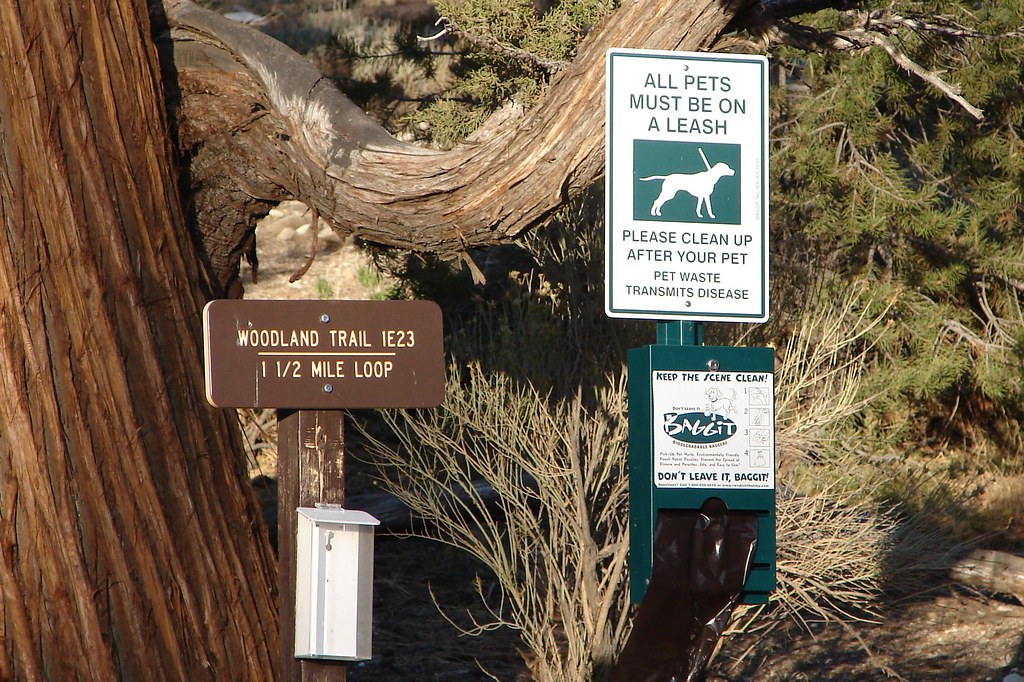 Big Bear Lake Dog Friendly
