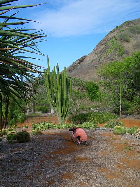 Koko Head Botantical Gardens Flickr Photo Sharing