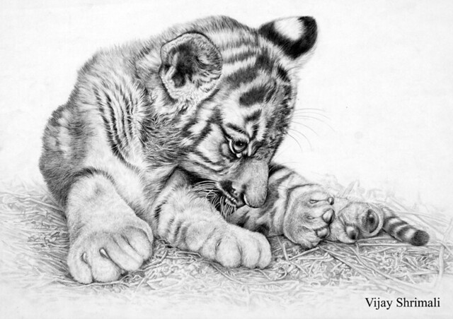 Image Result For Cheetah Cub Coloring