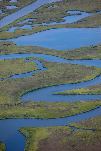 BP oil damage will cripple these marsh lands for years. | by Kris Krug