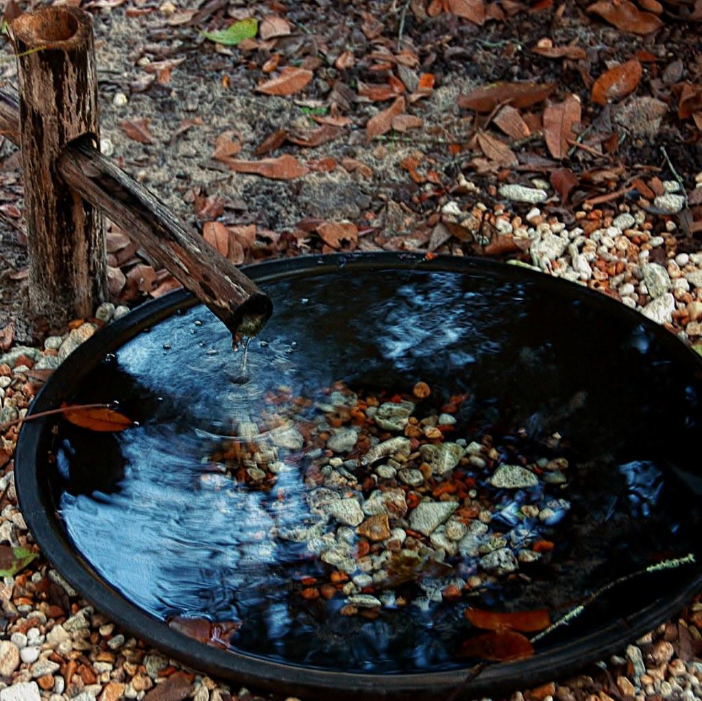 Dog Friendly Water Feature  My favorite Botanical garden ha