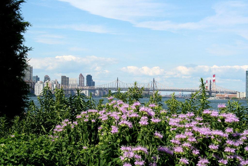 NYC bridge view