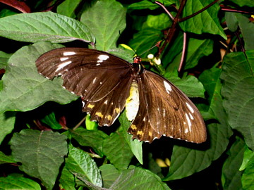 butterfly conservatory niagara falls elizabeth kuhns. Black Bedroom Furniture Sets. Home Design Ideas
