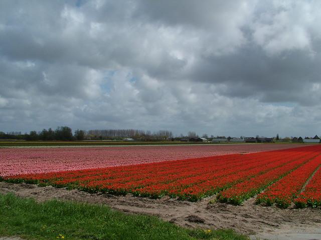 Bollen Bloeiend Voorjaar : Voorjaar bloeiende bollen vpbijman flickr