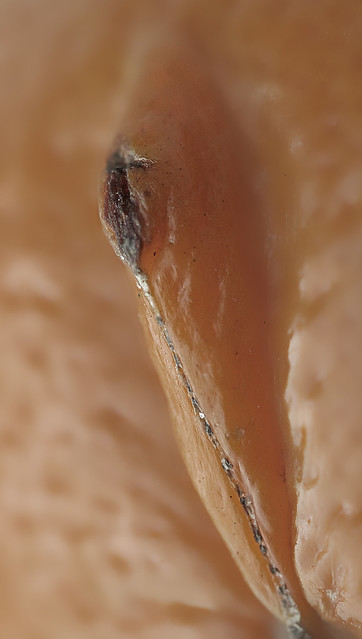dating app slikke klitoris