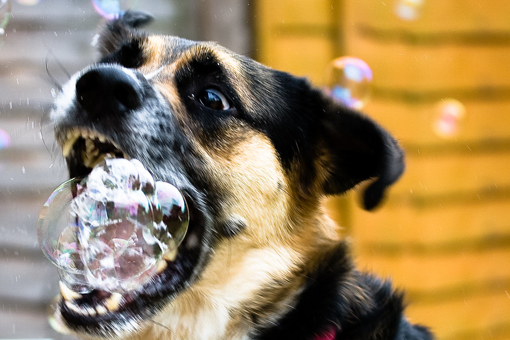 Rabid dog | Foaming at the mouth | Tony da Franca | Flickr