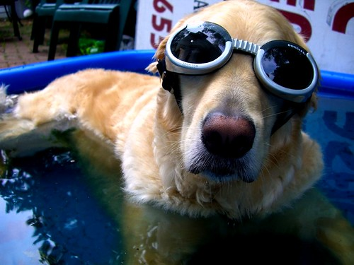 Moby wearing his shades in the pool | by Ciara Chase Photography