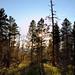 Forest Sunbursting