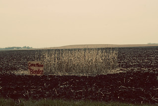 Corn Maze 4 Blondes | Flickr - Photo Sharing!