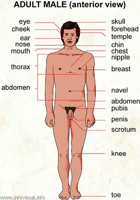 Male Adult Sites 3