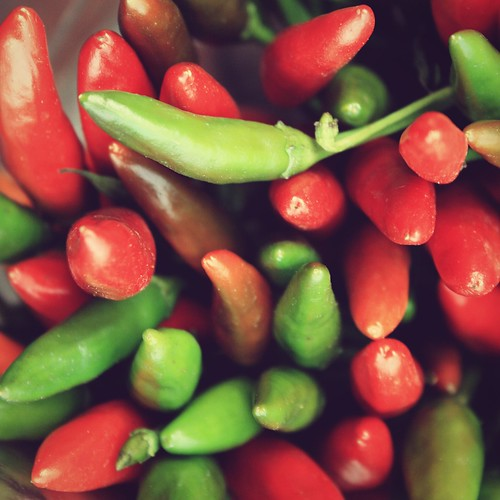 chilli | by claudiarndt