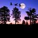 Night of the Cranes