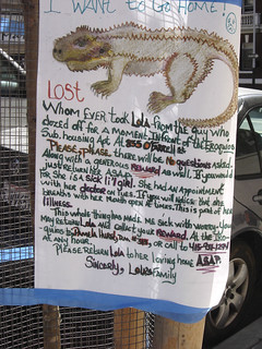 Lost or Stolen Pet | by Lulu Vision
