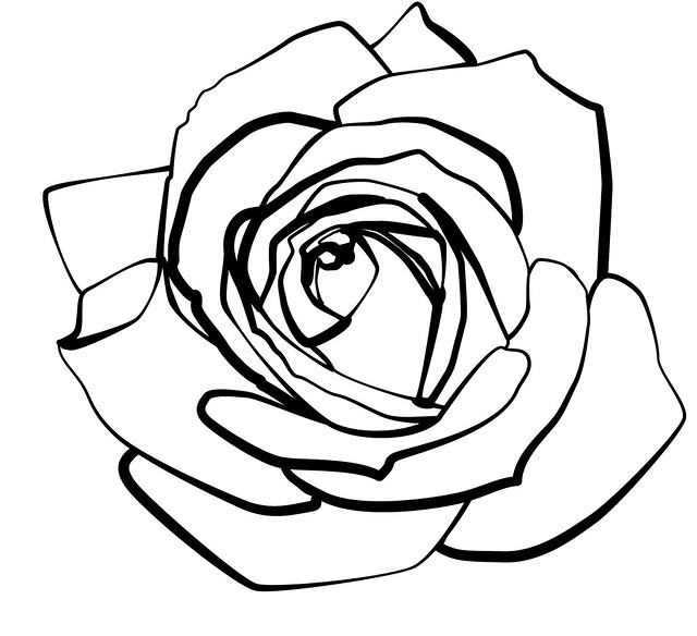 Line Drawing Of A Rose : Rose line flickr photo sharing