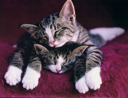 Image result for cats sleeping