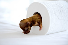 Almost there ! | by Oli Haukur