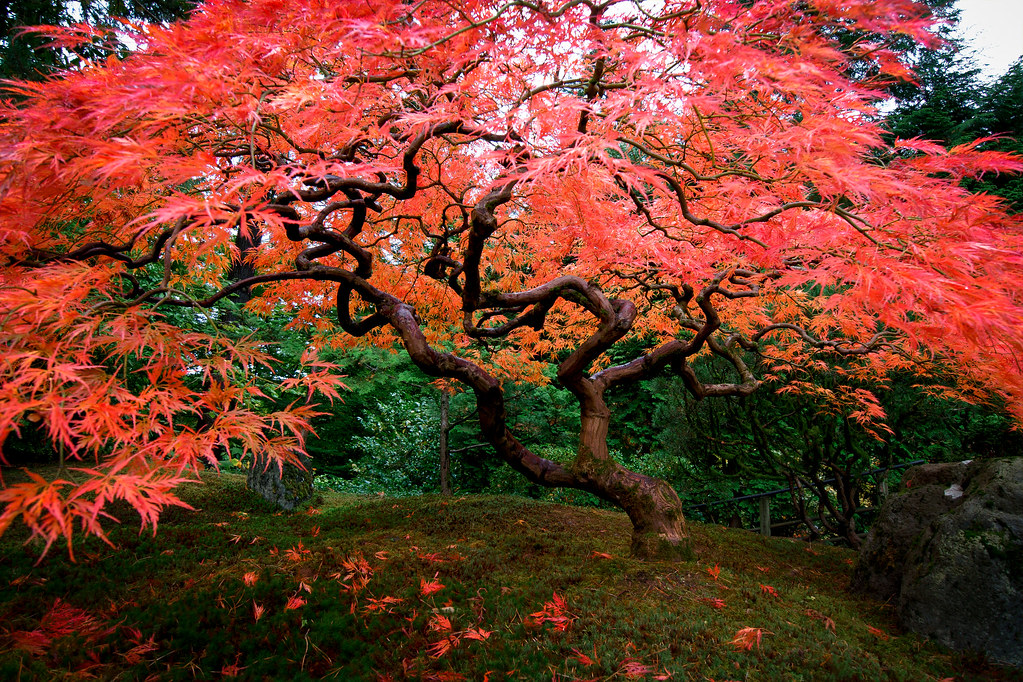 Portland japanese garden portland or portland japanese for Arbres jardin japonais