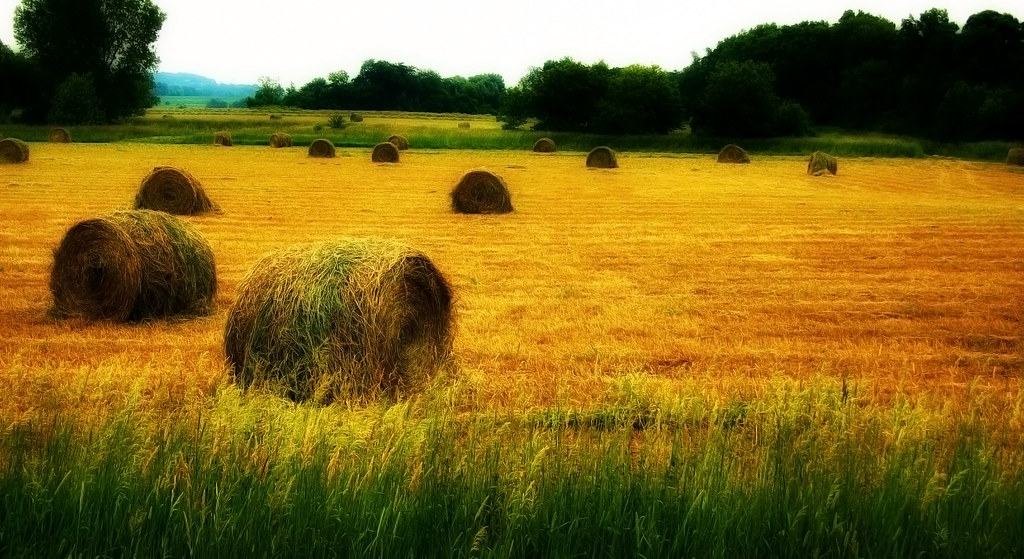 fertile land - photo #13