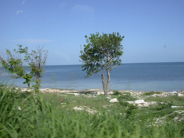 Along the Gulf of Mexico | Scenery somewhere in the state of… | Flickr