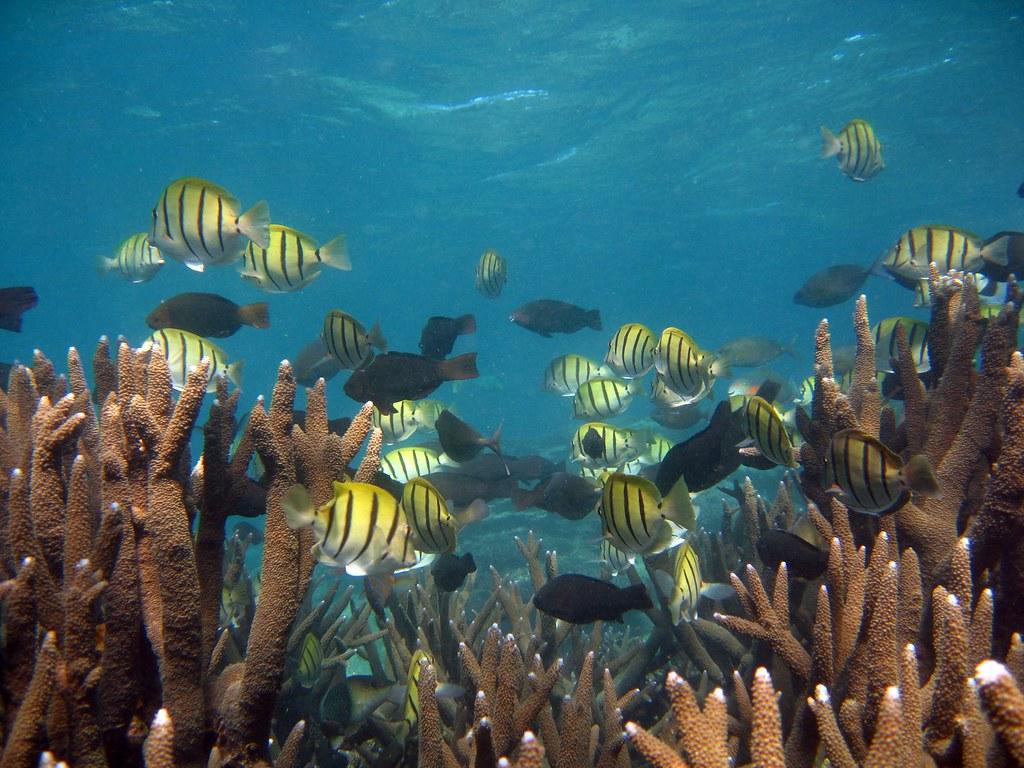 CBA - Ningaloo Reef and Fish