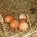 Fresh eggs every day are not to be sniffed at