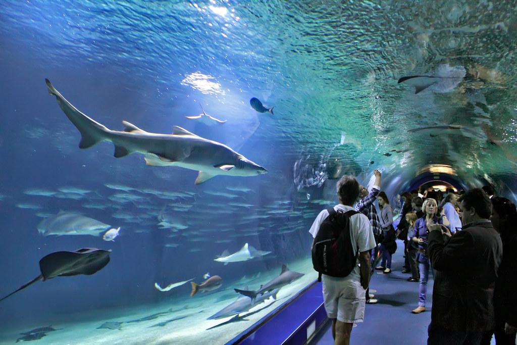 Oceanogr fic valencia the aquarium oceanogr fic in for Oceanografic valencia