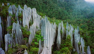 Pinnacles at Mulu, Gunung Mulu National Park, Borneo | by paulwhitepics