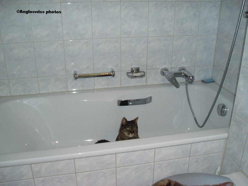 Tabby hiding in the bath