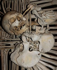 Bird Pecking Skull - All Human Bone | by Curious Expeditions