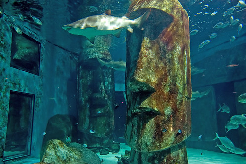 Tiger Sharks At London Aquarium Flickr Photo Sharing