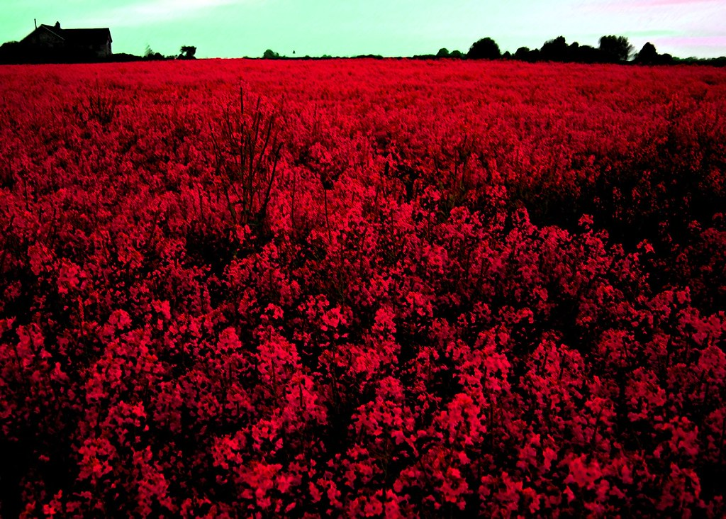 crimson meadow ok clearly some work done here to