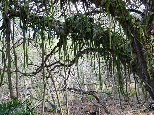 Koko Head Botantical Gardens Explore Coconut Wireless