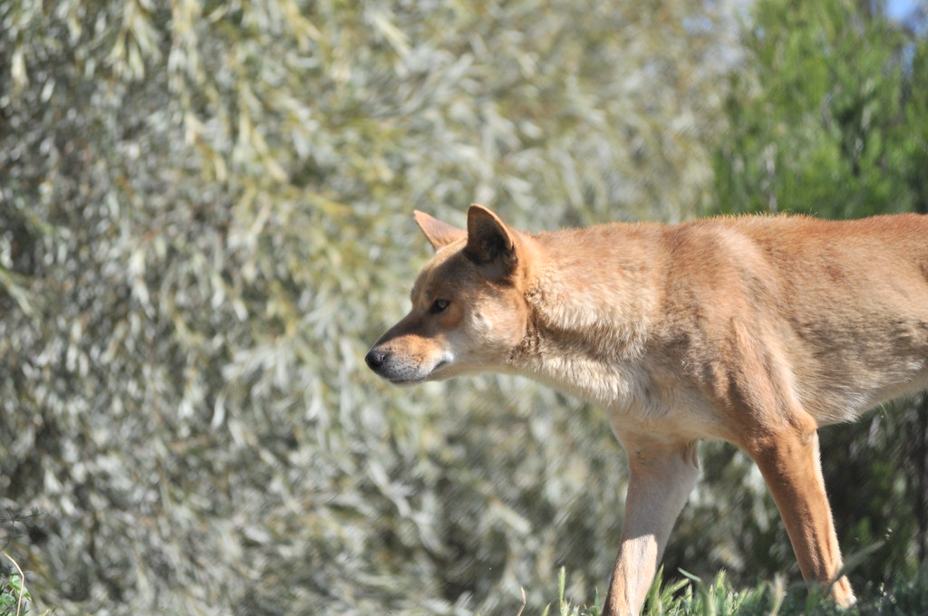 Wild Dogs And Cats Typically Consume Organs Bones And Cartilage