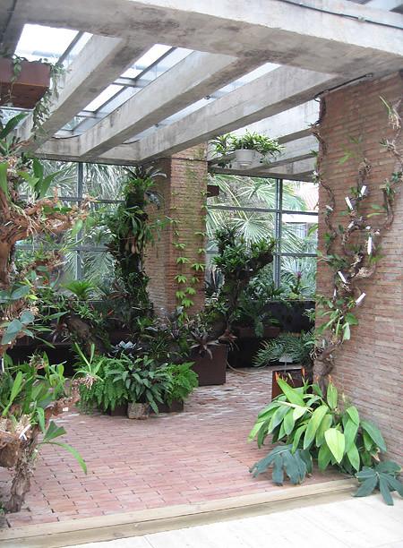 Invernadero de plantas epifitas greenhouse of epiphytes Plantas de invernadero
