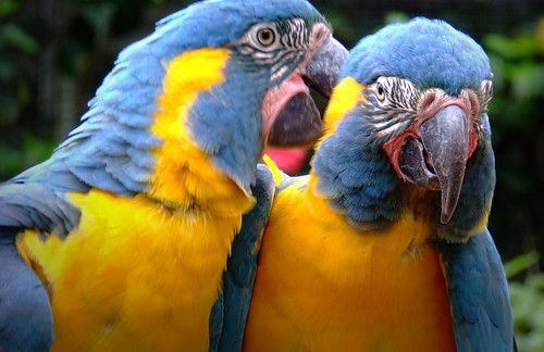 'The Secrets Of The Parrots' (Loro Parque,Tenerife) | by Mr Andy Bird