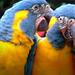 'The Secrets Of The Parrots' (Loro Parque,Tenerife)