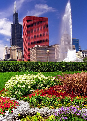 Chicago - Grant Park Flowers & Sears(Willis) Tower | by David Paul Ohmer