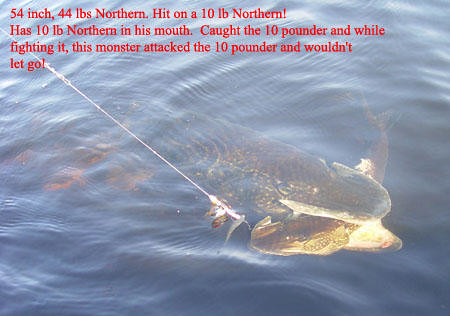 44 Lb Northern Pike with 10 Lb fish in mouth | 924th ...