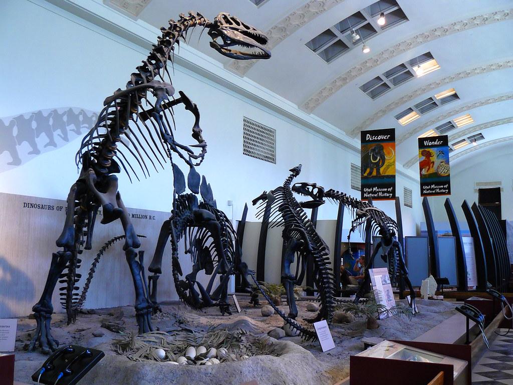 Foyer Museum Utah : Utah museum of natural history dinosaur hall this