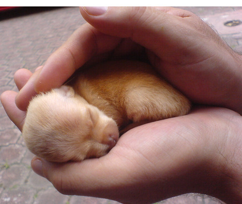 Image Result For Can Newborn Dogs