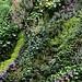 vegetal wall, detail