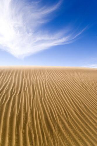 Kuwait Desert Bbc Shell Wildlife Photographer Of The